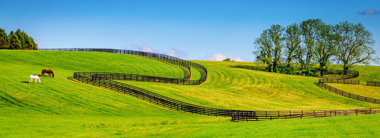 Horse Farm Realty Scottie Campbell
